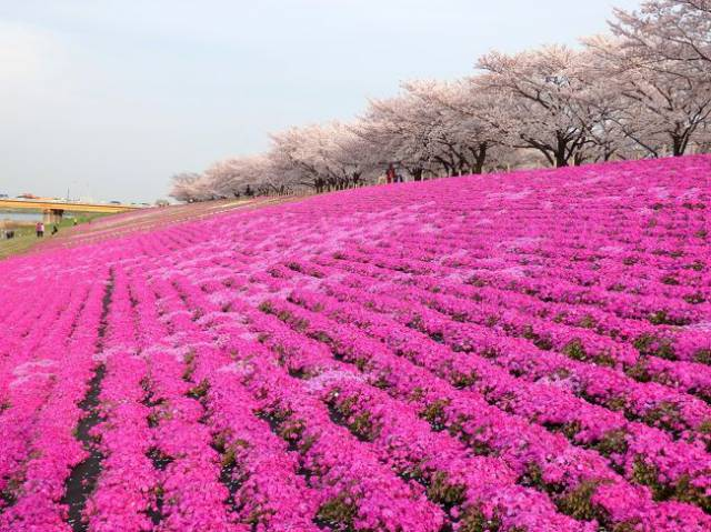 赤羽桜堤緑地