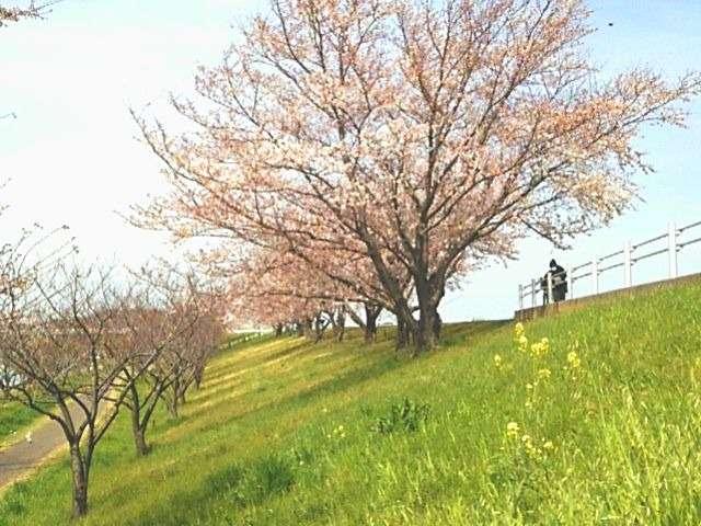 赤羽桜堤緑地01