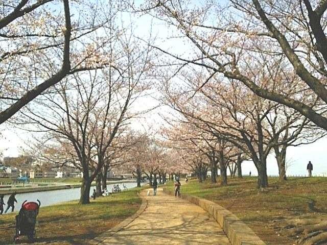 赤羽桜堤緑地02