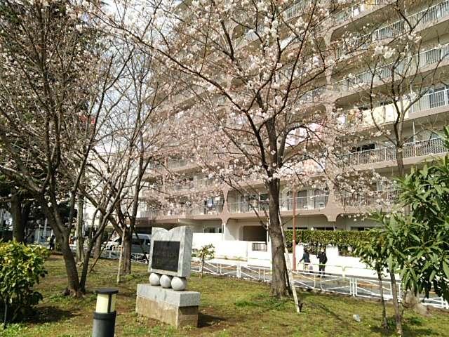 赤羽公園桜01