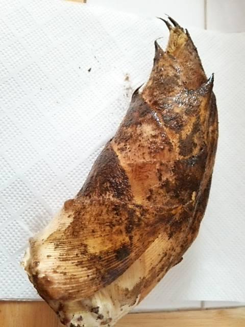タケノコ王の筍