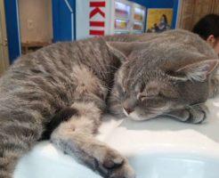 池袋猫カフェ「コックンの別荘」